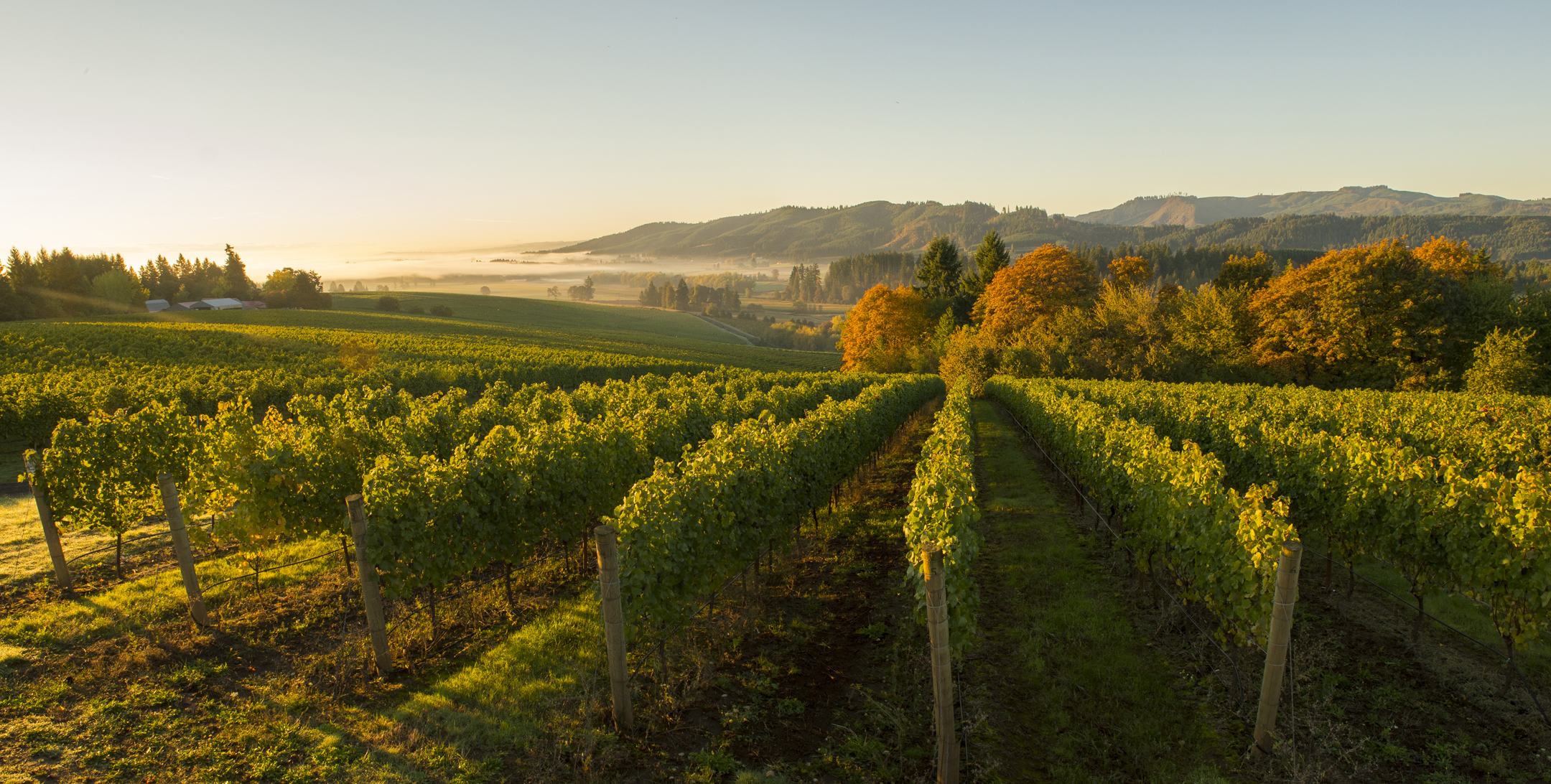 Willamette Valley Vineyards Trade And Press