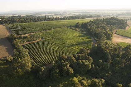 Elton vineyard shown from a drone with lush green vineyards
