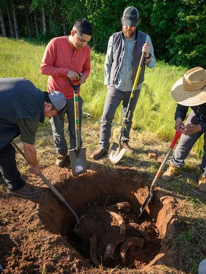 Willamette Valley Vineyards workers digging up buried cow horns