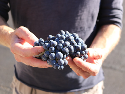 Willamette Valley Vineyards - Jim Bernau Responds to Copper