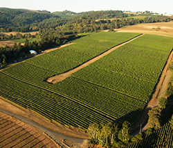Elton Vineyard aerial photo