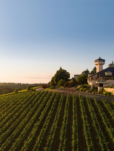 Enjoy our classic Oregon wines and breathtaking vineyard! Pictured: Estate Tasting Room and Vineyard.